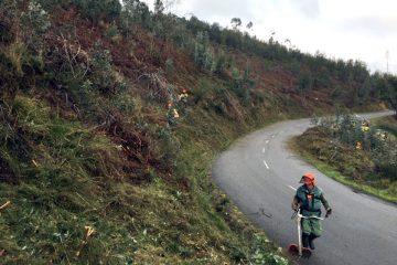 Sapadores Florestais, Limpeza terrenos