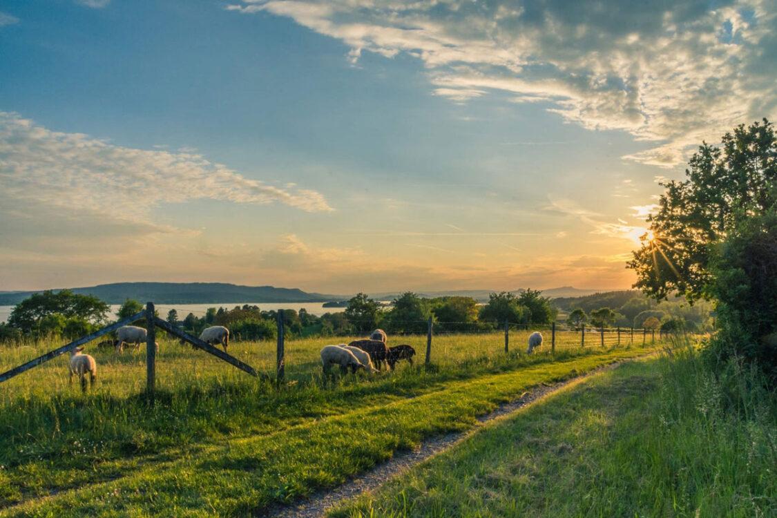 Jovens Agricultores, Fundos comunitários